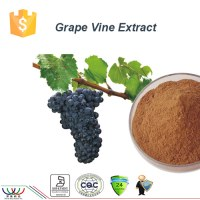 Sucre dans le sang d'équilibrage naturel pur raisin antioxydant extrait de vigne