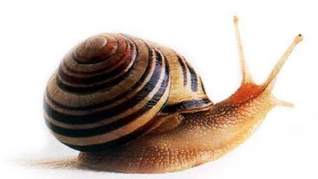 https://www.algomtl.com/upload/snail_05-YvufTWxV.jpg