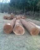 Vente de Bois dur Tropical sur Bûches