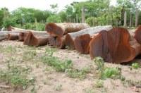 Vente de Guayacan / L'ébène brésilien sur bûches