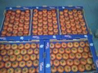 Tomates fraîches