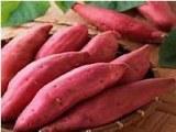 Qulity Virus--fresh Sweet Potato