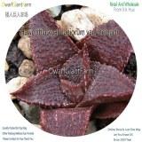 50Pcs A Set Haworthia koelmaniorum var. mcmurtr Seed DGF-S-HH049