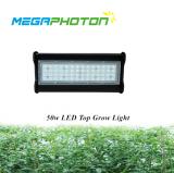 Haut LED Grandir la lumière 50w