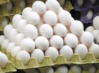 Fresh Chicken Eggs,white and brown table eggs