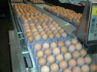 Grade A White Chicken Eggs for sale