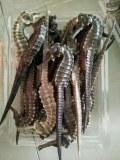 Hippocampe Séché