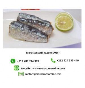 Moroccan Sardines factory