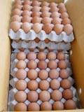 Oeufs de poulet frais à vendre