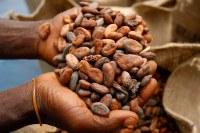 Meilleures fèves de cacao de qualité pour l'exportation