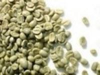 ARABICA et ROBUSTA COFFEE