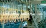 Full Chicken slaughter machines