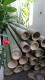 Lot bambou 3M diam 13.5 a 15cm