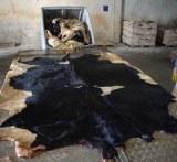 Cow Hide /Buffalo hide /Donkey hide /Wet blue