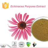 Pure natural improving immunity chicoric acid Echinacea purpurea extract