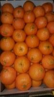 Lot d'orange navel, tomate et legumes