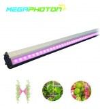 Par contre ip66 interlighting étanches ou lumière de projets d'éclairage horticoles serre hydropo...