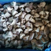 2016 new crop IQF frozen/canned shiitake mushrooms