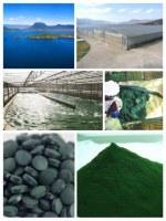 Spiruline naturelle et écologique en poudre ou comprimés