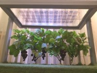 GrapeProtection & SolarEnergy