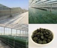 Producteur grossiste spiruline et chlorella certifiée bio