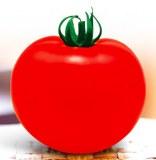 T43 HONGRUI énorme hybird fruits rouges f1 graines de tomates à vendre