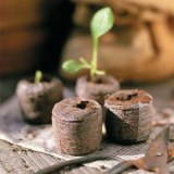 Asia Coconut Coir Pellets/ Peat Plant Pot Jiffy/ Coir Pith