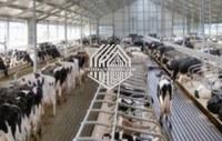 Maison de vache de structure métallique avec du CE en Chine à vendre